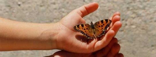 Franquicias Free Butterflies - Franquicias de Suelta de Mariposas.