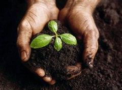 Franquicias de Agricultura Ecológica - Grow Shop, Alimentación, Salud.