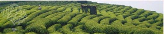 The Tea Corner Franquicias - Hemos creado en la Península Ibérica (España - Portugal - Andorra) el concepto EXOTIC TEA.